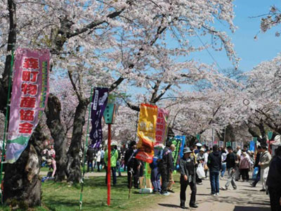 Mori-machi Cherry Blossom Festival (Early May)