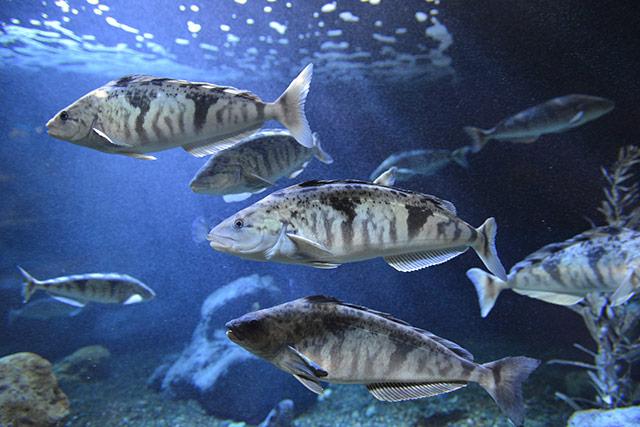 Hokkaido Otaru_Otaru Aquarium_UU-Hokkaido